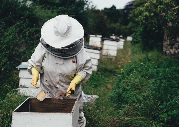 Beehive Garden