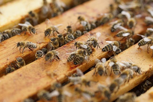 beehive-640