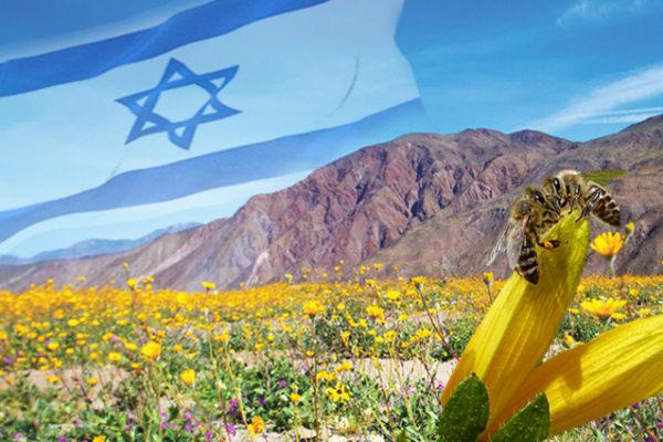Israel honey