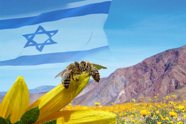 israel-honey
